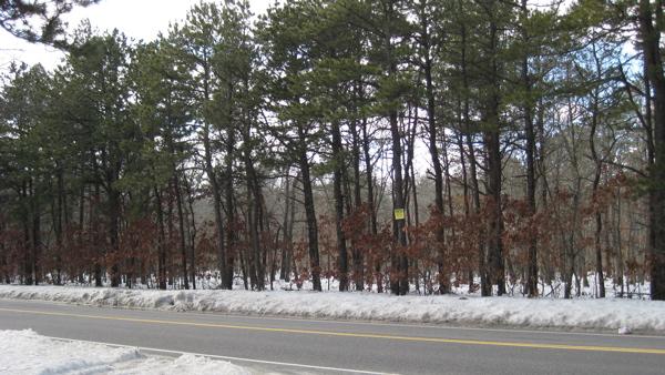 Speonk Woods